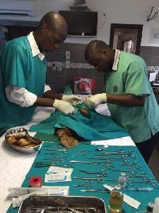 Service vétérinaire
